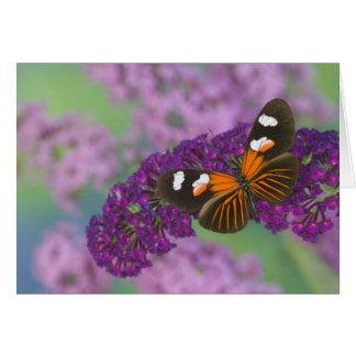 Sammamish Washington Photograph of Butterfly on 10 Card