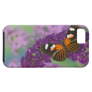 Sammamish Washington Photograph of Butterfly on 10 iPhone 5 Covers