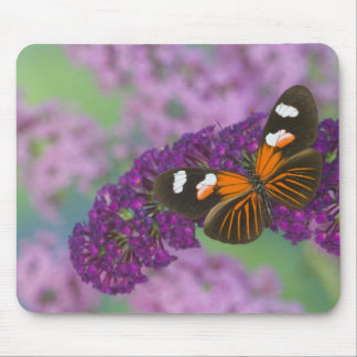 Sammamish Washington Photograph of Butterfly on 10 Mouse Mat