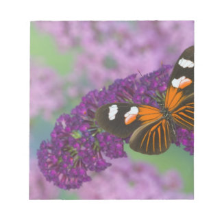 Sammamish Washington Photograph of Butterfly on 10 Notepad