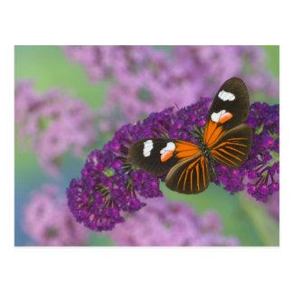 Sammamish Washington Photograph of Butterfly on 10 Postcard