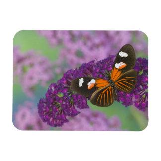 Sammamish Washington Photograph of Butterfly on 10 Rectangular Photo Magnet