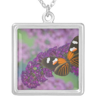 Sammamish Washington Photograph of Butterfly on 10 Silver Plated Necklace