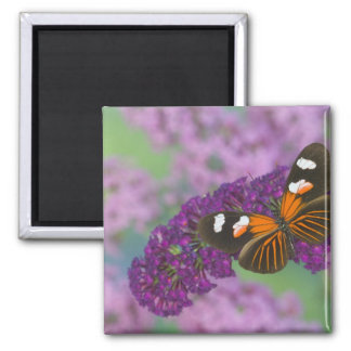 Sammamish Washington Photograph of Butterfly on 10 Square Magnet