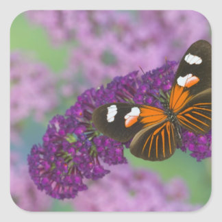 Sammamish Washington Photograph of Butterfly on 10 Square Sticker
