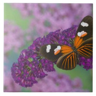 Sammamish Washington Photograph of Butterfly on 10 Tile