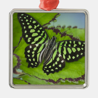 Sammamish Washington Photograph of Butterfly on 11 Christmas Ornament