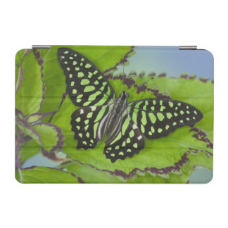Sammamish Washington Photograph of Butterfly on 11 iPad Mini Cover