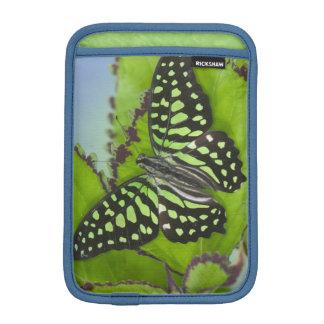 Sammamish Washington Photograph of Butterfly on 11 iPad Mini Sleeve