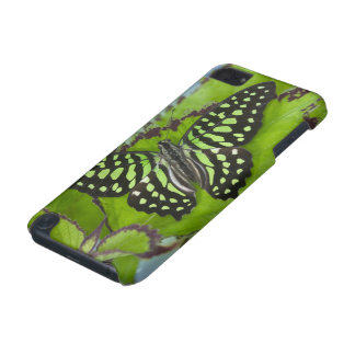 Sammamish Washington Photograph of Butterfly on 11 iPod Touch 5G Covers