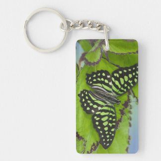 Sammamish Washington Photograph of Butterfly on 11 Key Ring