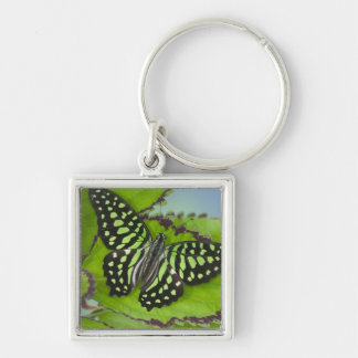 Sammamish Washington Photograph of Butterfly on 11 Key Ring