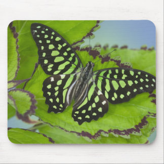Sammamish Washington Photograph of Butterfly on 11 Mouse Mat