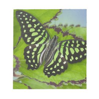 Sammamish Washington Photograph of Butterfly on 11 Notepad