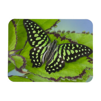 Sammamish Washington Photograph of Butterfly on 11 Rectangular Photo Magnet