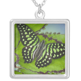 Sammamish Washington Photograph of Butterfly on 11 Silver Plated Necklace