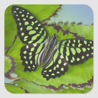 Sammamish Washington Photograph of Butterfly on 11 Square Sticker