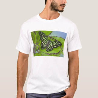 Sammamish Washington Photograph of Butterfly on 11 T-Shirt