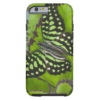 Sammamish Washington Photograph of Butterfly on 11 Tough iPhone 6 Case
