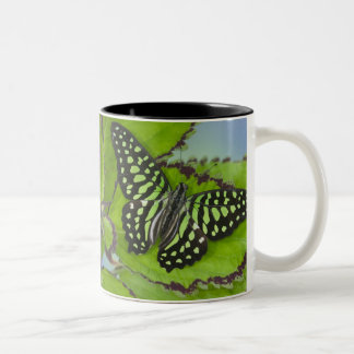 Sammamish Washington Photograph of Butterfly on 11 Two-Tone Coffee Mug