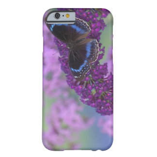 Sammamish Washington Photograph of Butterfly on 12 Barely There iPhone 6 Case