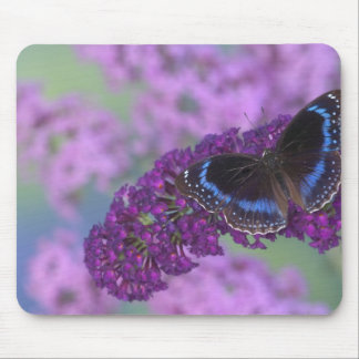 Sammamish Washington Photograph of Butterfly on 12 Mouse Mat