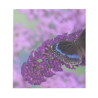 Sammamish Washington Photograph of Butterfly on 12 Notepad
