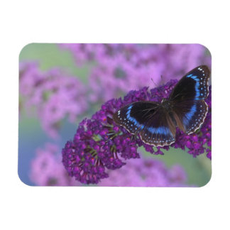 Sammamish Washington Photograph of Butterfly on 12 Rectangular Photo Magnet