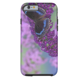 Sammamish Washington Photograph of Butterfly on 12 Tough iPhone 6 Case
