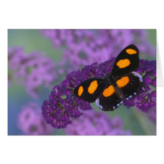 Sammamish Washington Photograph of Butterfly on 13 Card