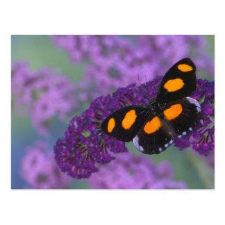 Sammamish Washington Photograph of Butterfly on 13 Postcard