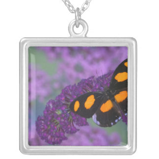 Sammamish Washington Photograph of Butterfly on 13 Silver Plated Necklace