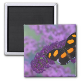 Sammamish Washington Photograph of Butterfly on 13 Square Magnet