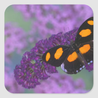 Sammamish Washington Photograph of Butterfly on 13 Square Sticker