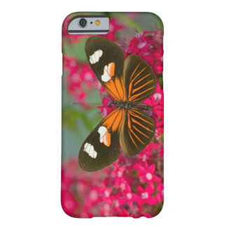 Sammamish Washington Photograph of Butterfly on 14 Barely There iPhone 6 Case