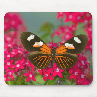 Sammamish Washington Photograph of Butterfly on 14 Mouse Mat