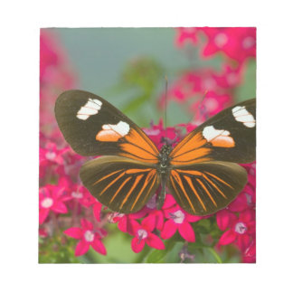 Sammamish Washington Photograph of Butterfly on 14 Notepad