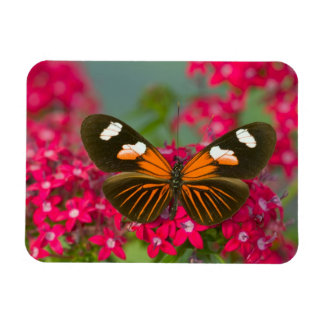 Sammamish Washington Photograph of Butterfly on 14 Rectangular Photo Magnet