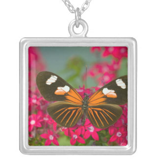 Sammamish Washington Photograph of Butterfly on 14 Silver Plated Necklace