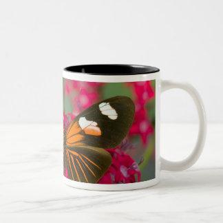 Sammamish Washington Photograph of Butterfly on 14 Two-Tone Coffee Mug