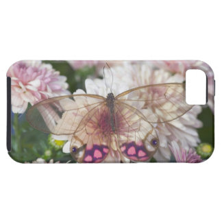 Sammamish Washington Photograph of Butterfly on 15 iPhone 5 Covers
