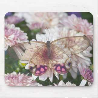 Sammamish Washington Photograph of Butterfly on 15 Mouse Mat