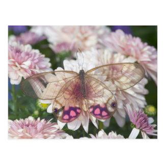 Sammamish Washington Photograph of Butterfly on 15 Postcard