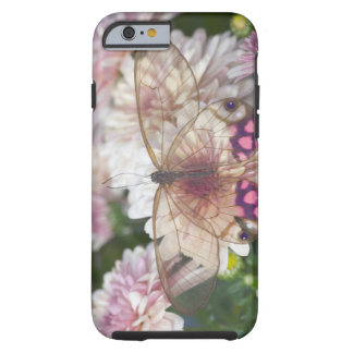 Sammamish Washington Photograph of Butterfly on 15 Tough iPhone 6 Case
