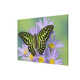 Sammamish Washington Photograph of Butterfly on 16 Canvas Print
