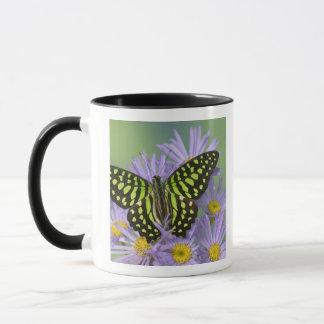 Sammamish Washington Photograph of Butterfly on 16 Mug