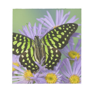 Sammamish Washington Photograph of Butterfly on 16 Notepad