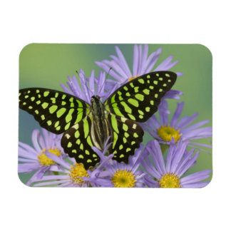 Sammamish Washington Photograph of Butterfly on 16 Rectangular Photo Magnet