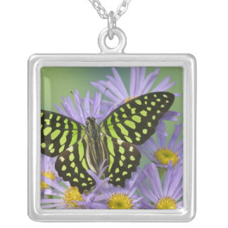 Sammamish Washington Photograph of Butterfly on 16 Silver Plated Necklace