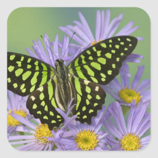 Sammamish Washington Photograph of Butterfly on 16 Square Sticker